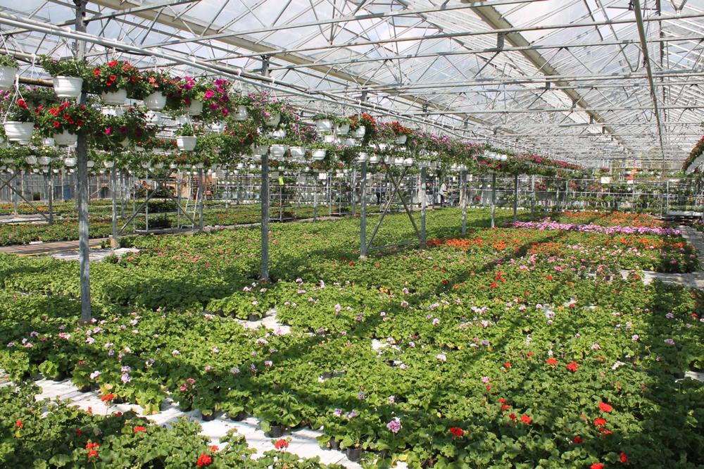 5) Ab ins Blumenparadies.