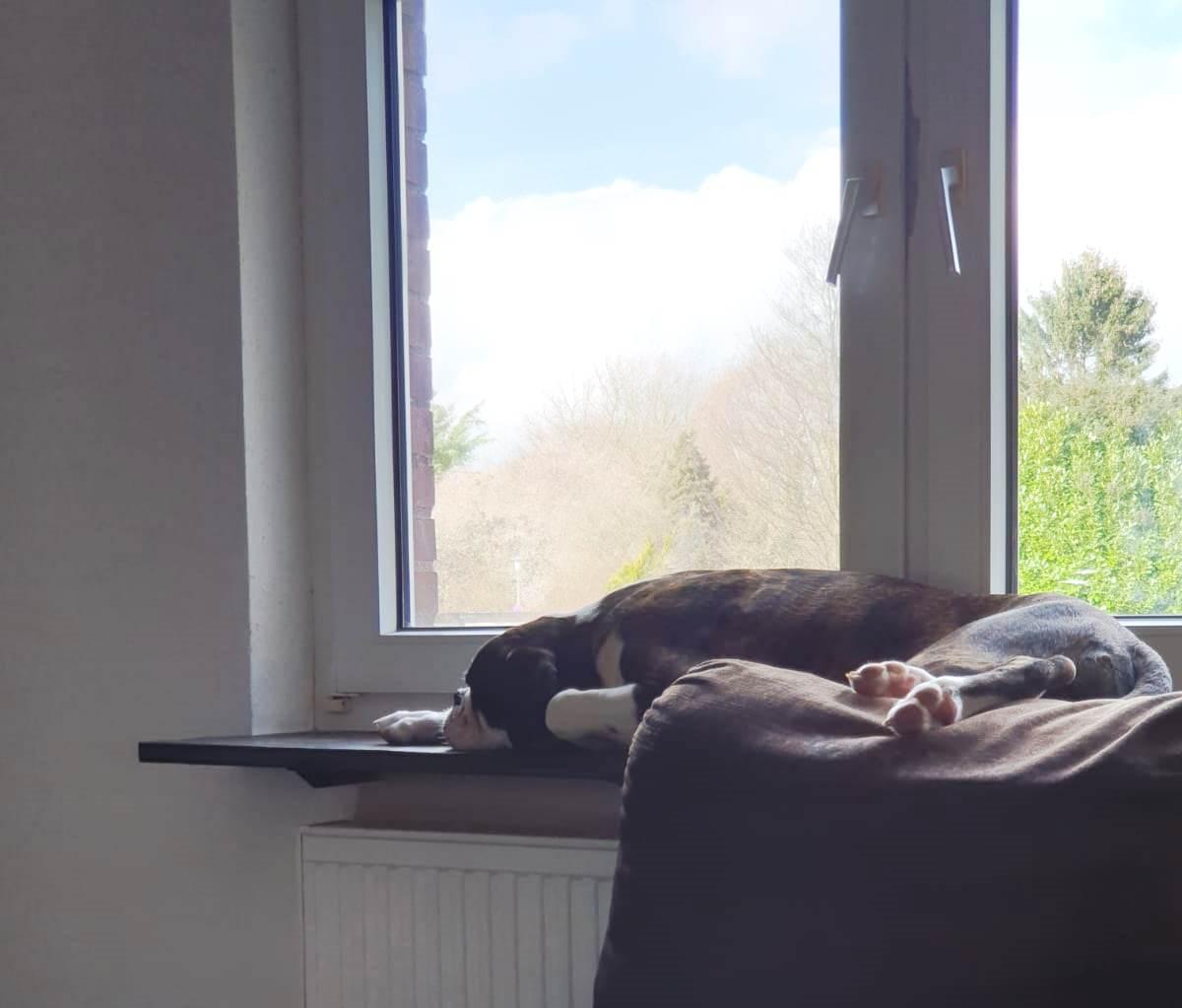 der beste Platz: auf der Fensterbank über der Heizung