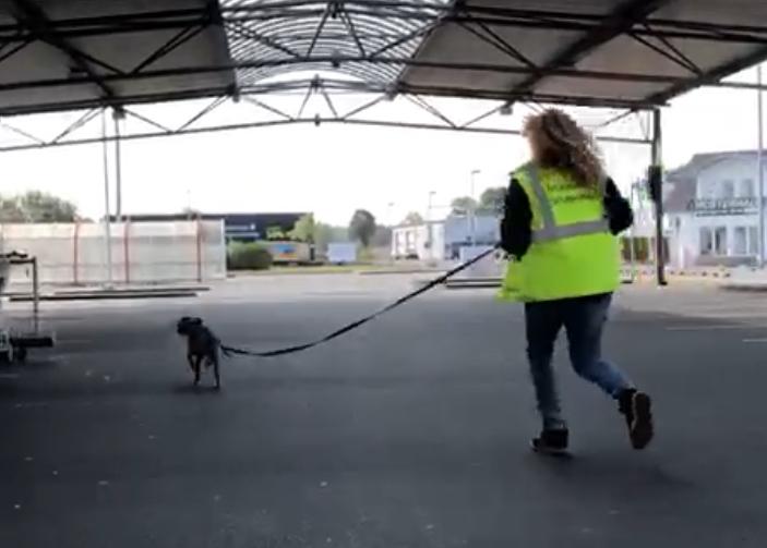 erstes Training mit der Rettungshundestaffel