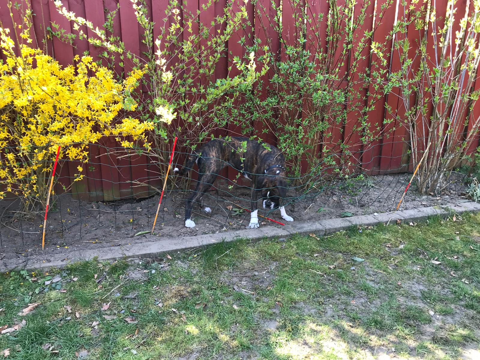 Diamond hilft bei der Gartenarbeit