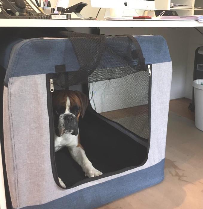Bürohund  :-)