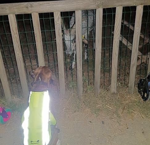im Tierpark... 3 Monate alt