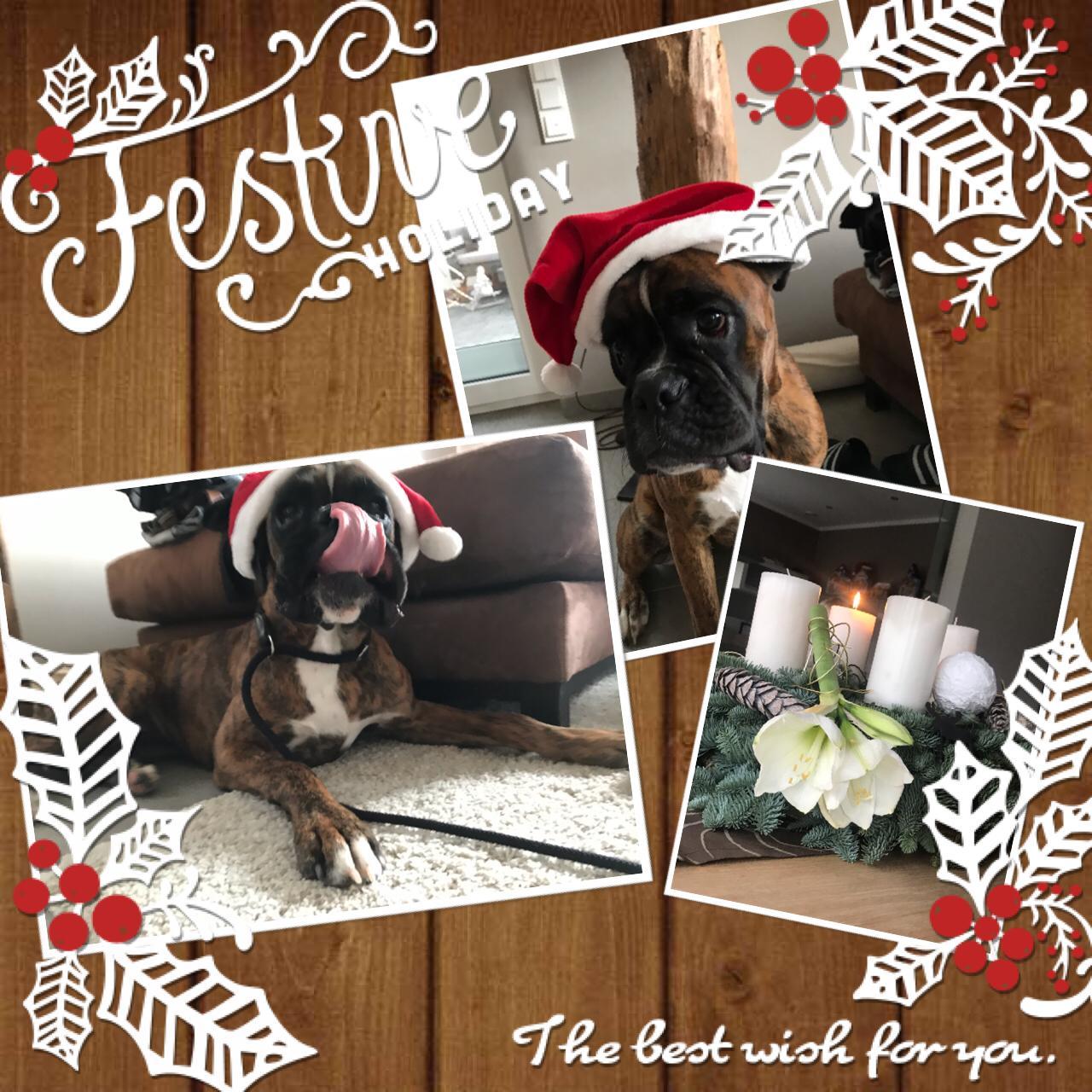 Cleo wünscht eine schöne Adventszeit