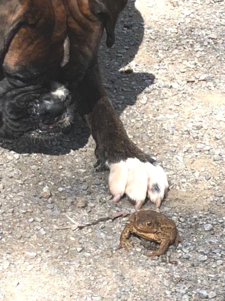 Blus mit Frosch-König(in)