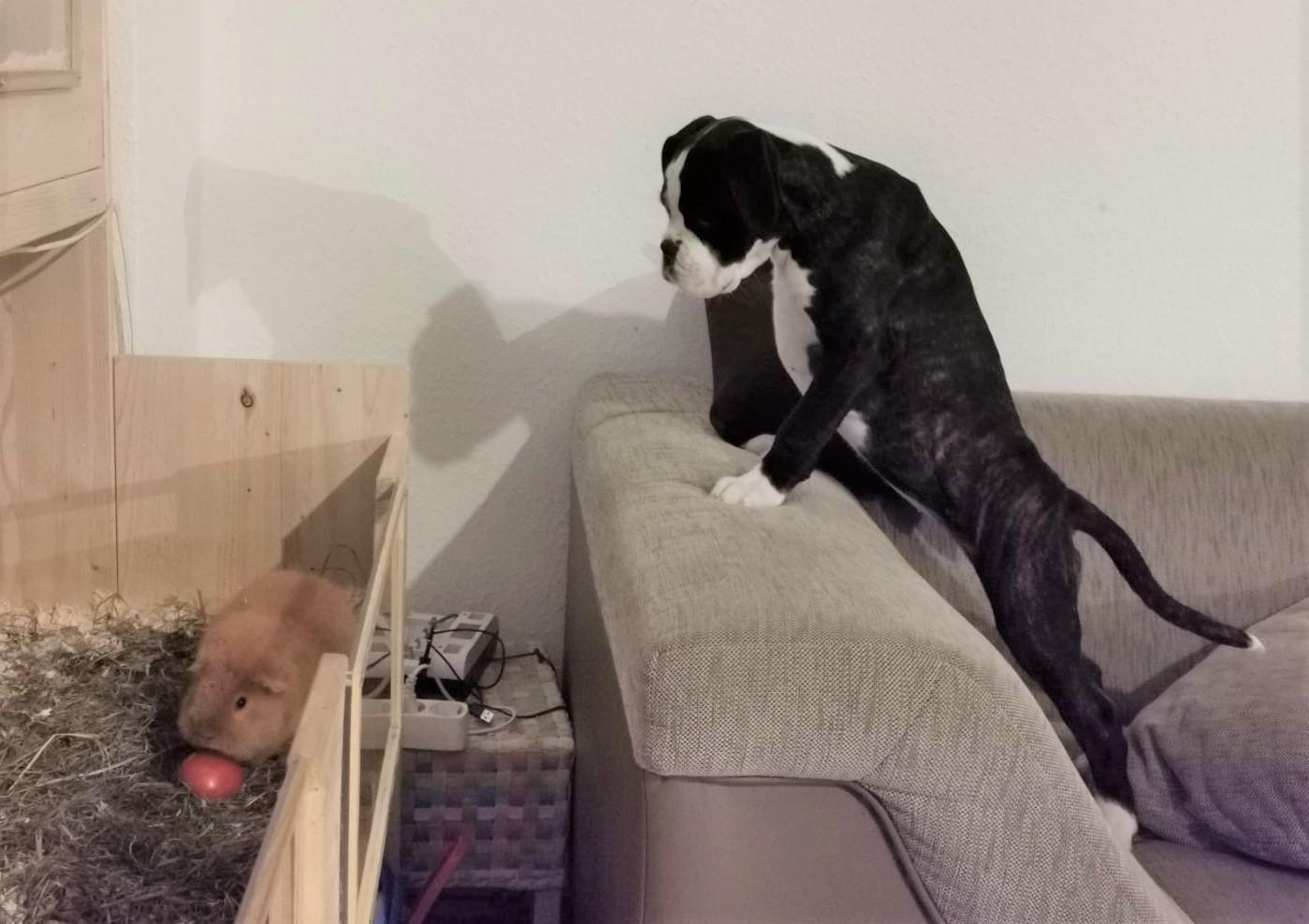 Hunde- Kino