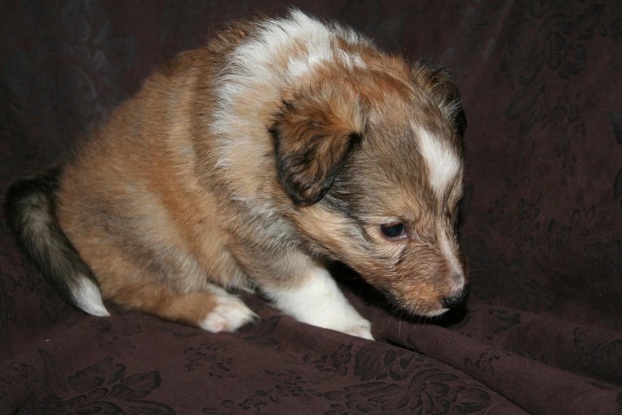 Edy ist auch satt, nur noch nicht ganz so müde, dann schaut er eben mal in die Kamera:)