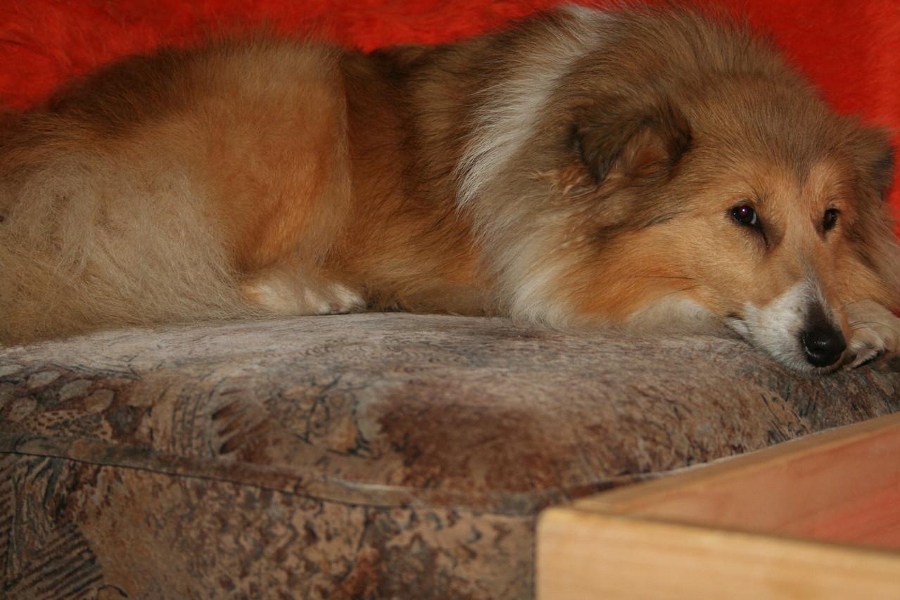 Coco schaut auch nach ihren kleinen Halbgeschwistern