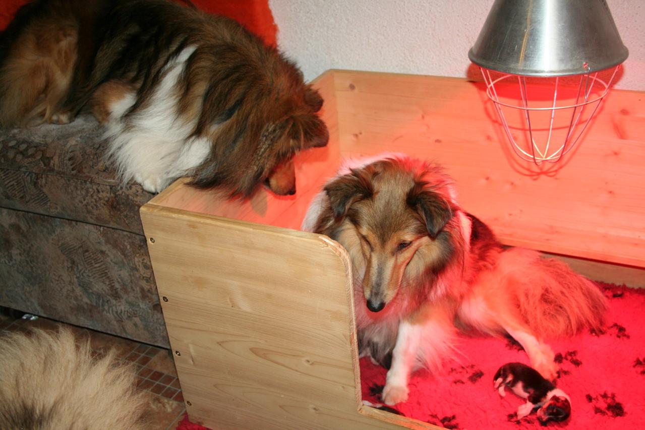 Der große Bruder August schaut nach Mama Franci und den kleinen Geschwistern