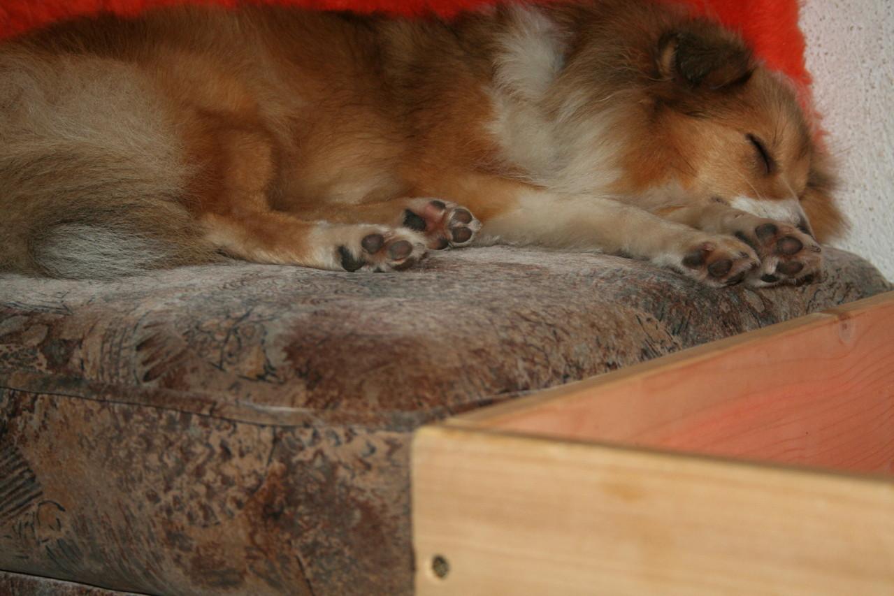 und schläft friedlich ein neben Mamas Wurfkiste.