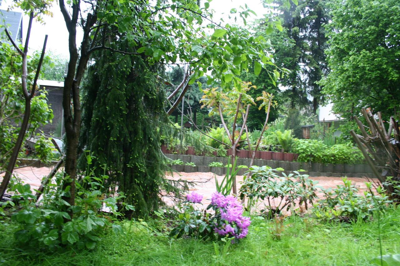 Unsere Pflanzen im Garten haben zum großen Teil  überlebt.