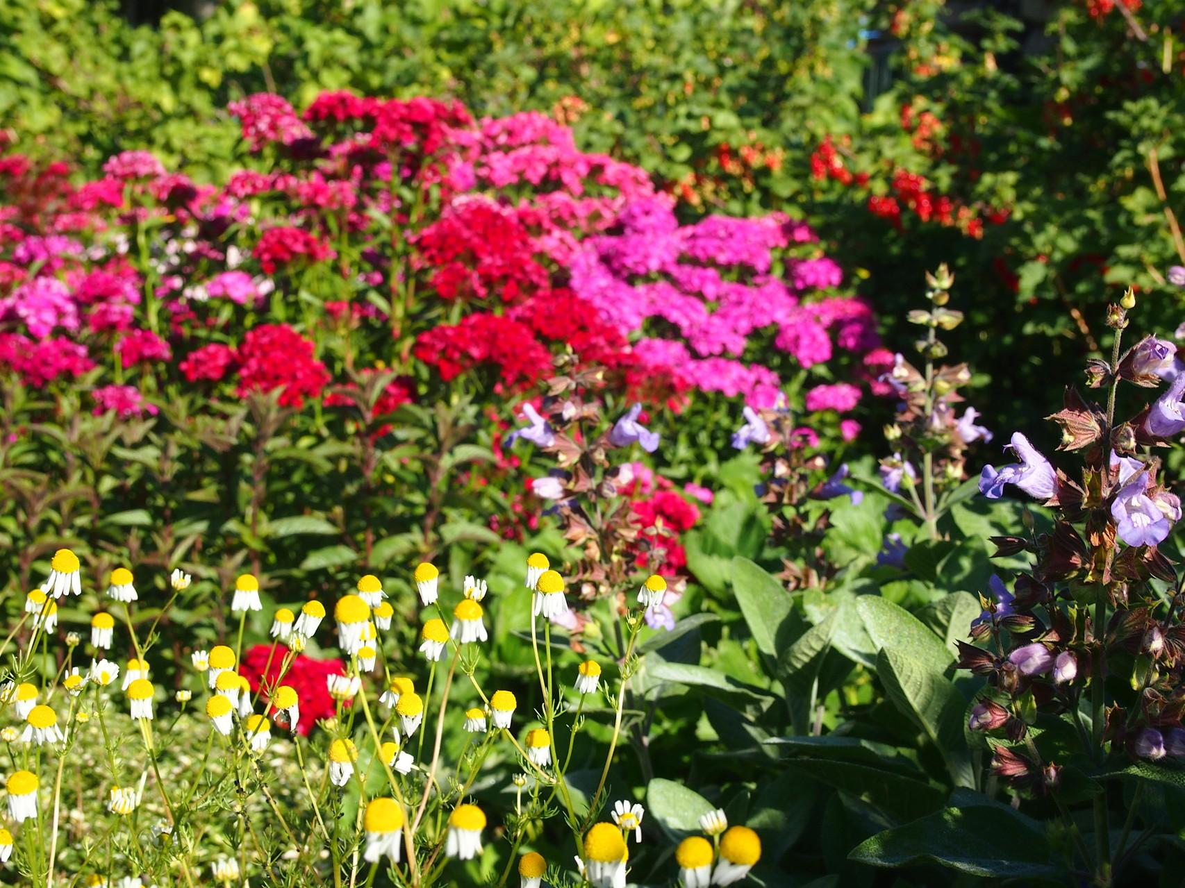 Mein Gemüse-Kräutergarten-ein liebevolles Miteinander :)