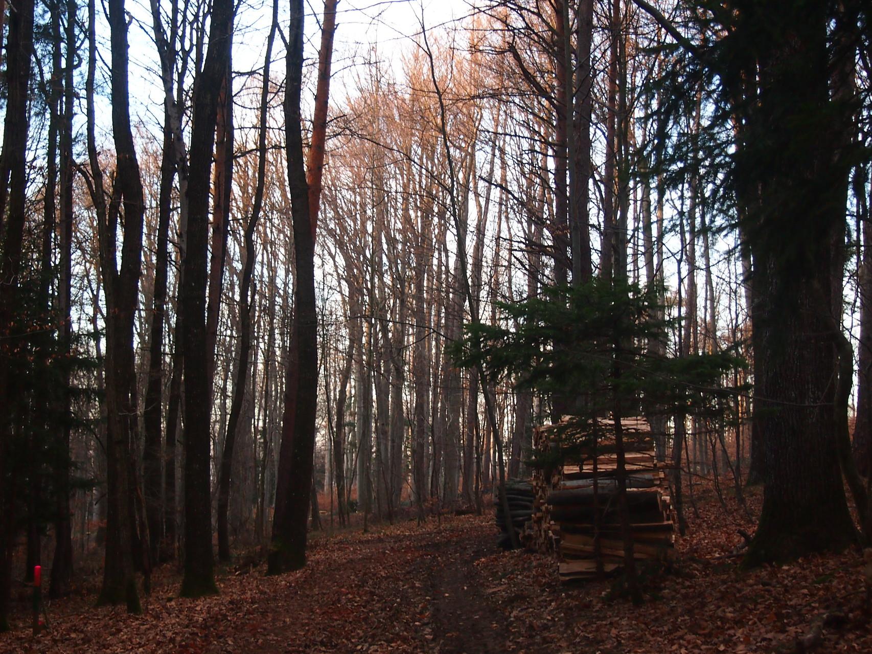 Unser Wald am Hegerberg