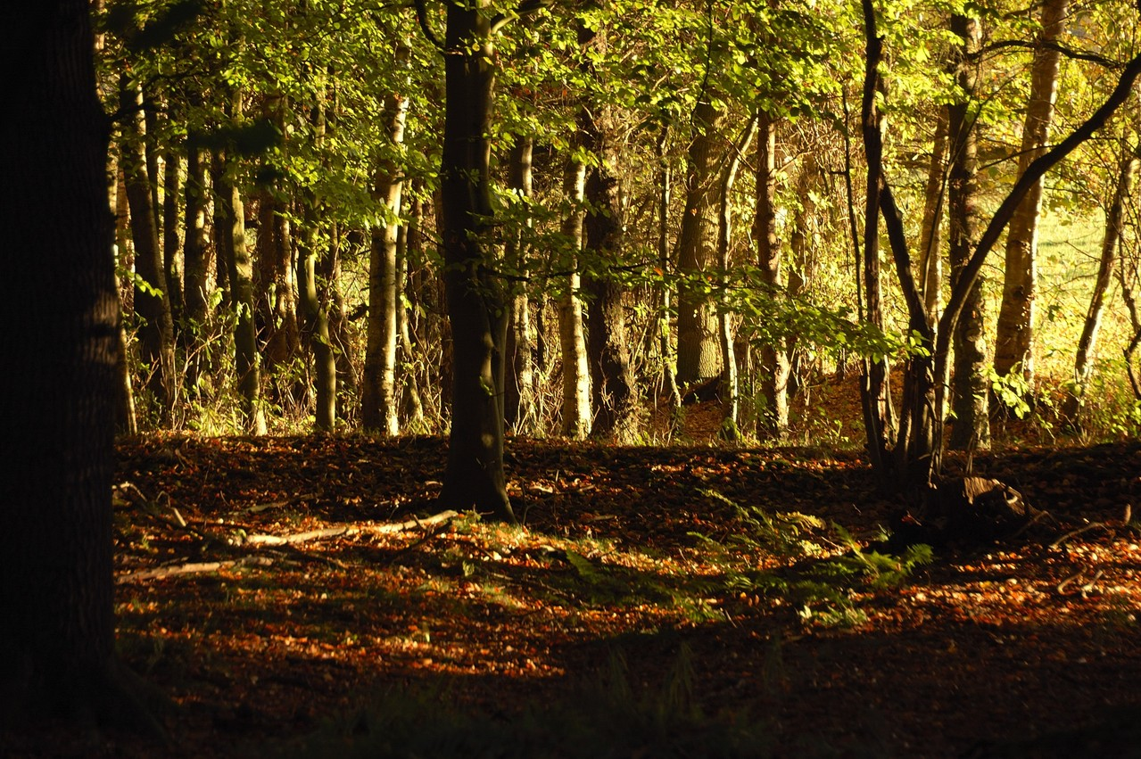 am Waldrand wird es heller -