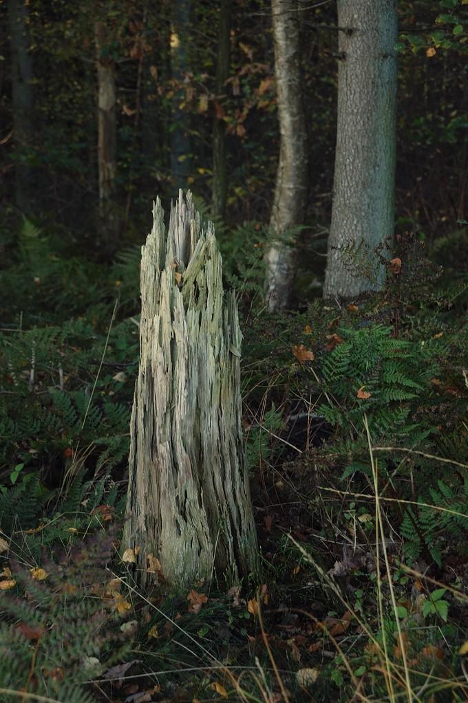 der letzte Rest eines Baumes