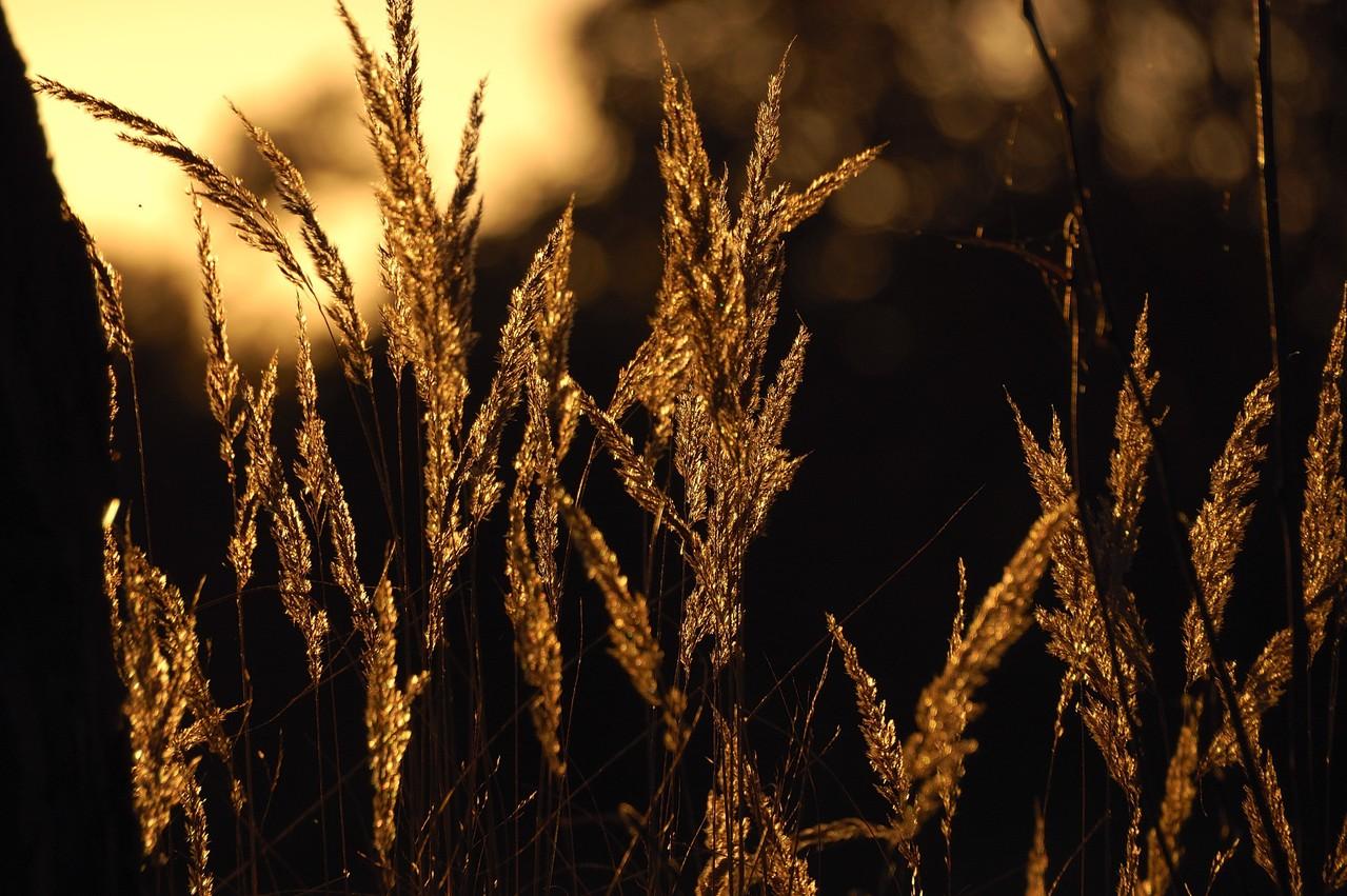 goldene Nachmittagssonne im trockenen Gras