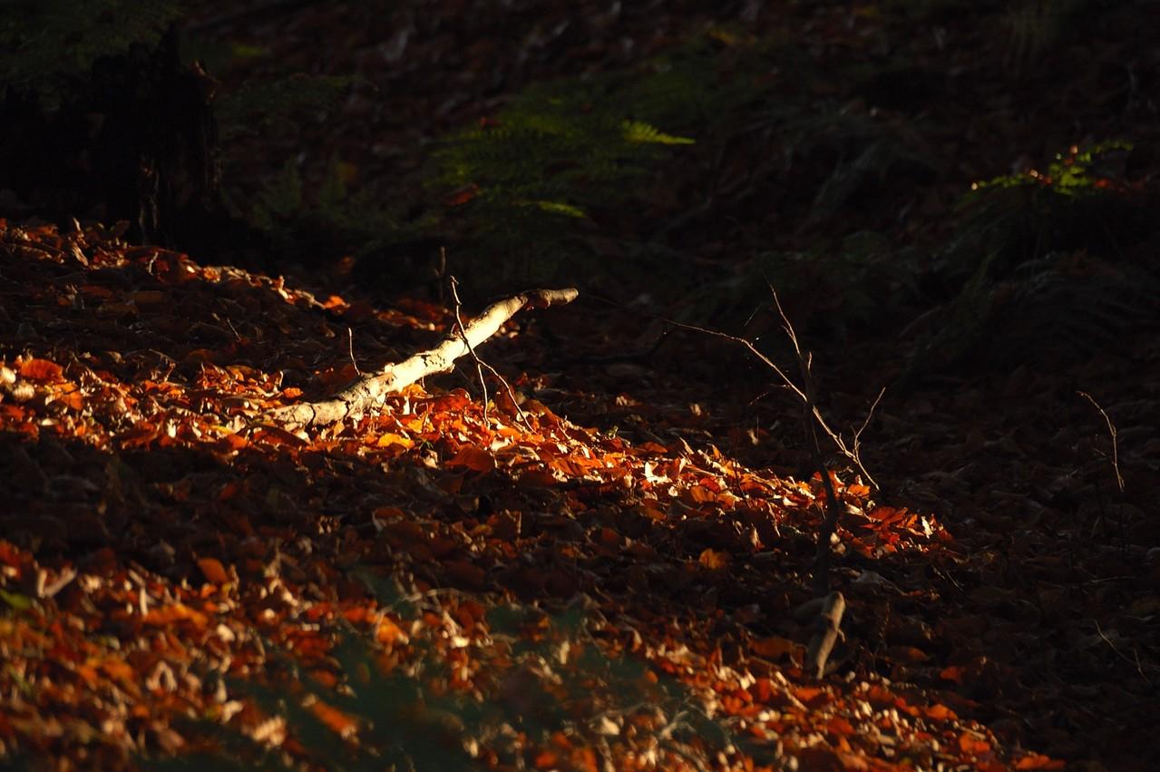 und das Totholz -