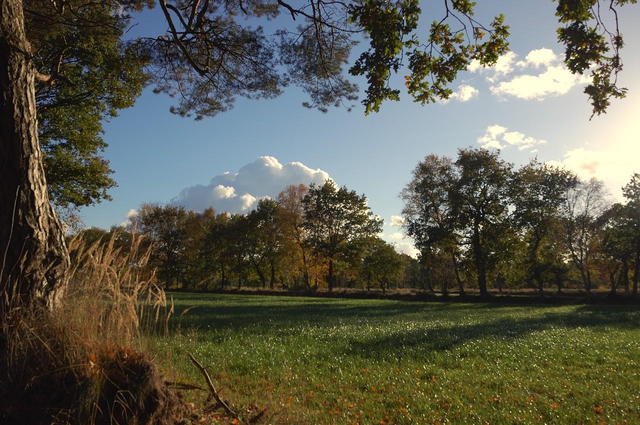 Blick über angrenzendes Grünland