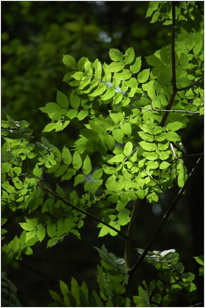 hin und wieder gelangt Sonnenlicht bis zum Waldboden