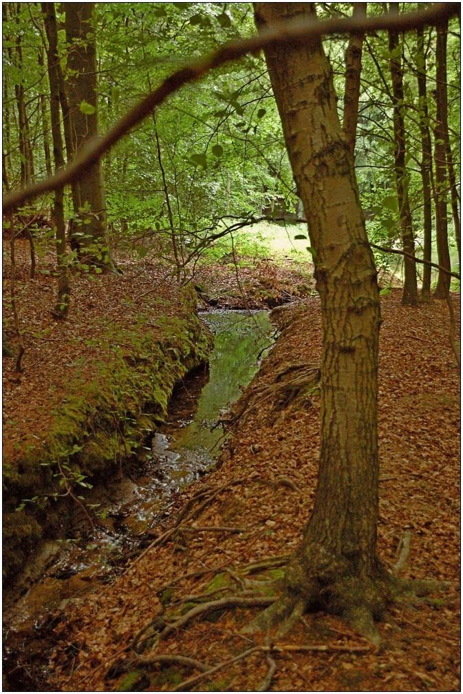 ... mal durch den Wald