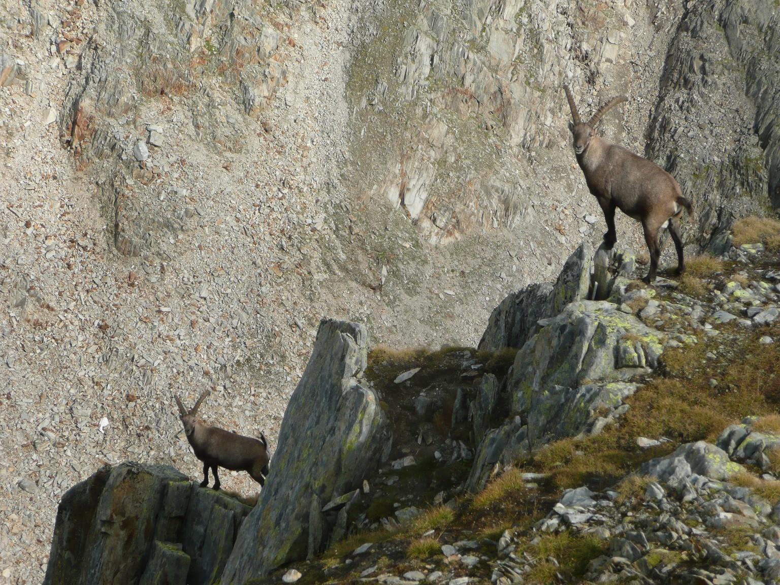 In den Bergen ist man stets unter genauer Beobachtung, Gotthard, TI