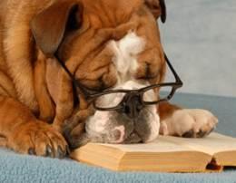 Literatur,Lesen,Neuromanagement