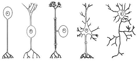 neuro,management,neuromanagement,zellen,bakterien,parasiten,