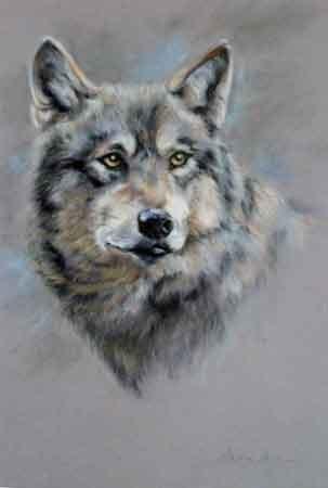 """""""Wolf"""" nach Original Vivien Walters,Pastell auf Velour,45x65cm,(c)D.Saul 2012"""