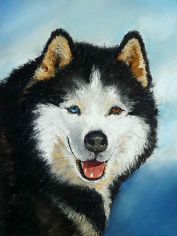 """Husky"",Pastell 30x40cm,(c)D.Saul 2012"