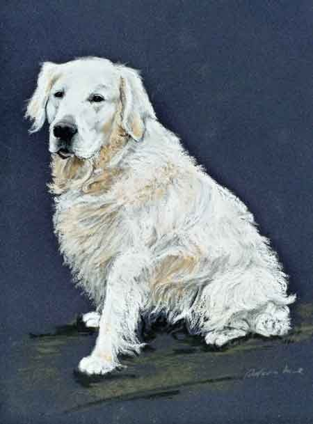 """Golden Retriever"",Pastell 23x32,5cm,(c)D.Saul 2012"