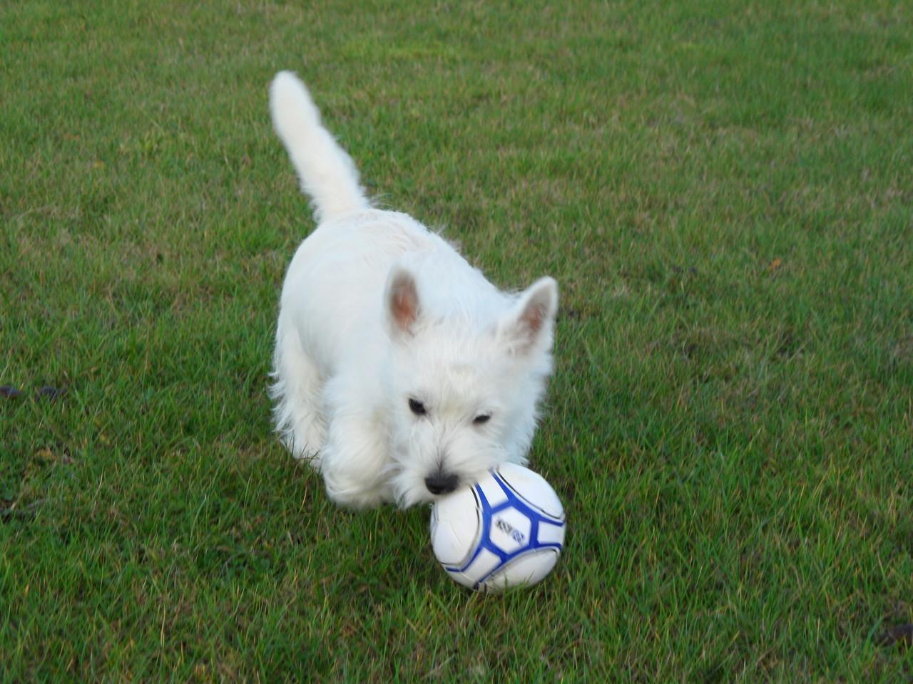 Kleiner ( GROßER) Fußballstar :-))