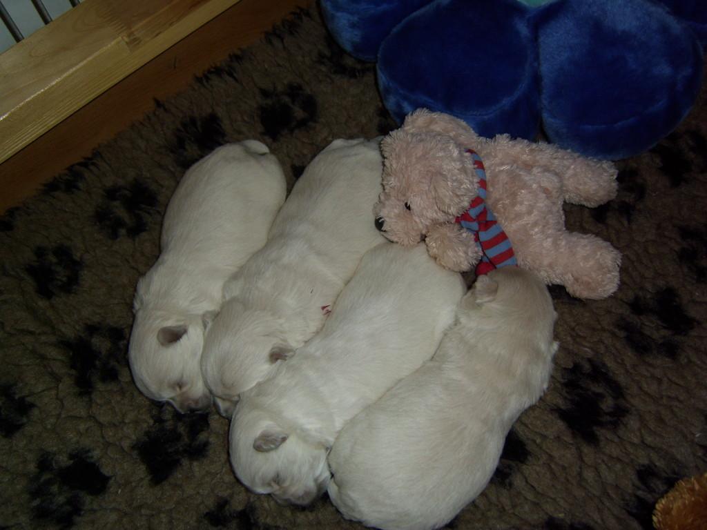 Naja, ausnahmsweise darf der Teddy mit kuscheln :-))))
