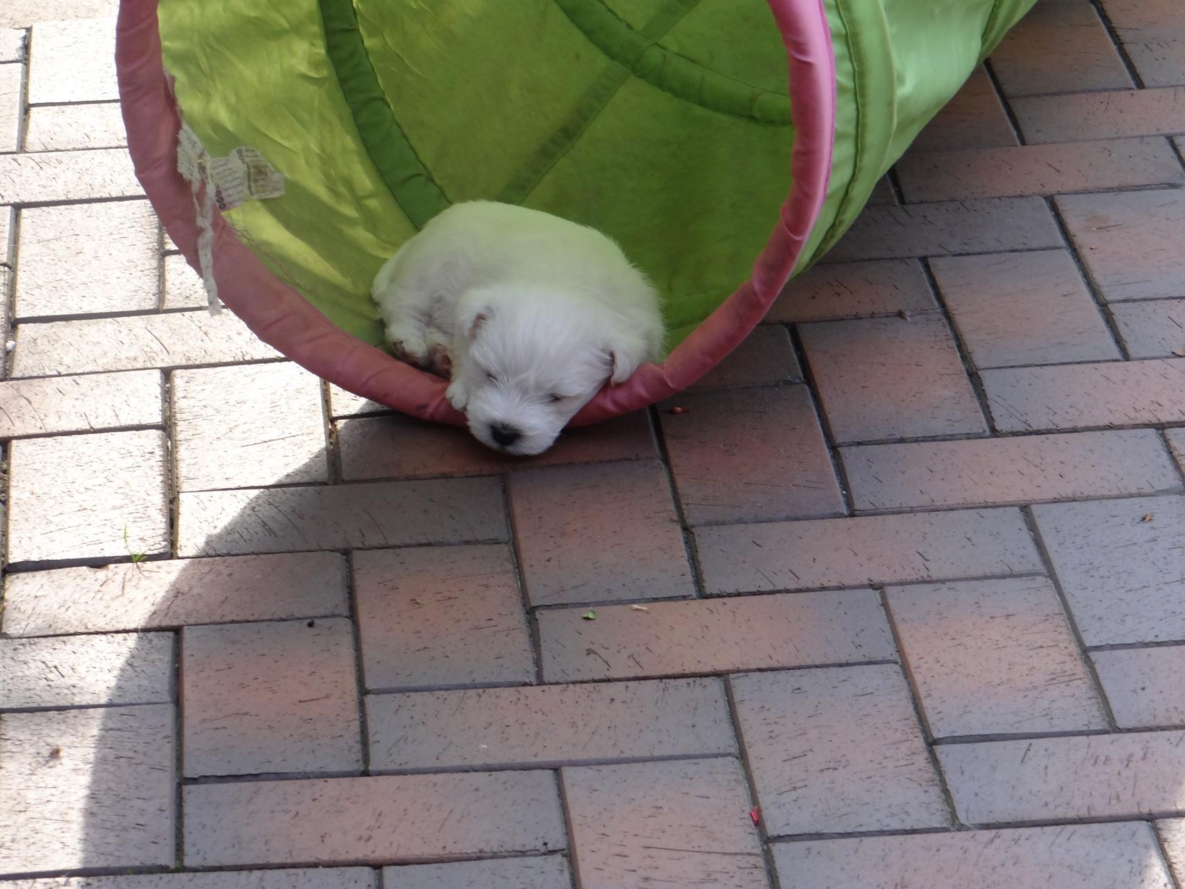 Bin ja so müde
