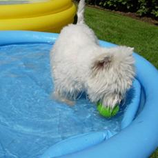 Lou-Lou im eigenem Pool