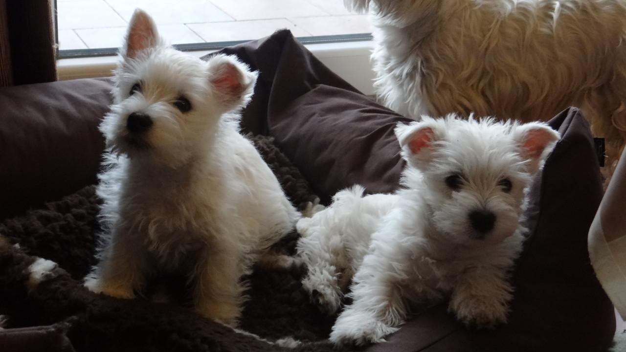 Billy ( links ) mit seiner Schwester Luna