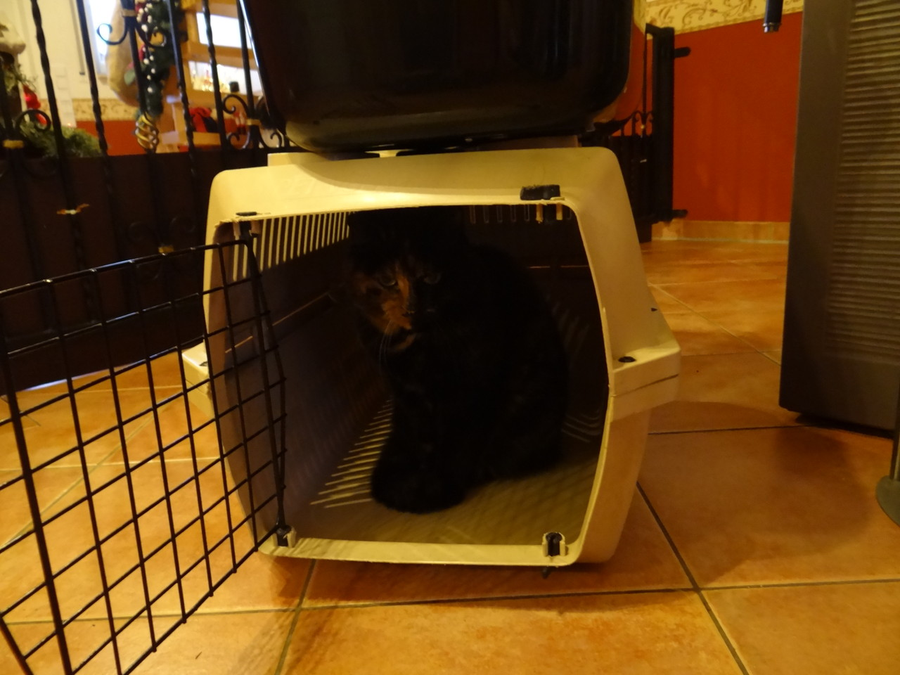 Vorbereitung für den Tierarztbesuch. Sari wollte wohl mit :-))))