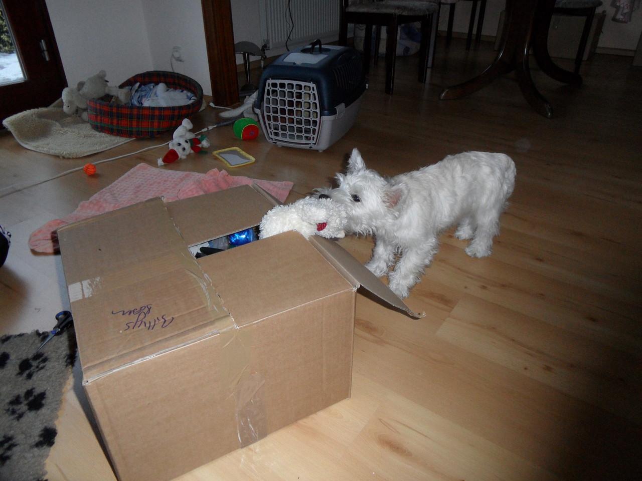 Wir sind umgezogen und meine Kartons packe ich selber aus :-)))