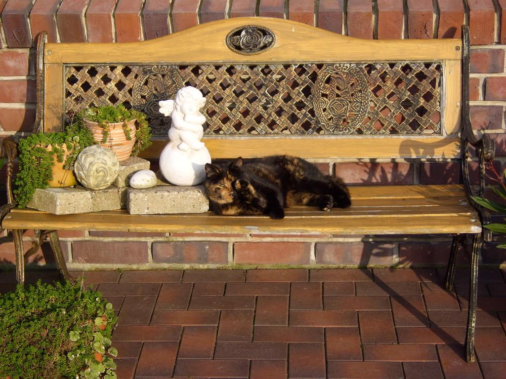 Sari beim Sonnenbad