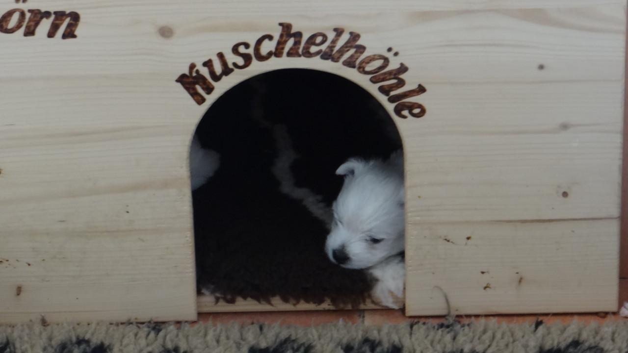 Hallo kleine Maus !! Na, alles noch voll im Blick ??