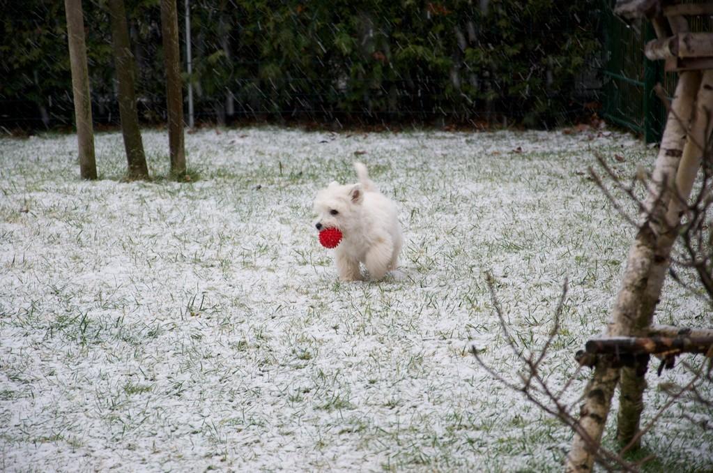 Jenny`s erster Schnee