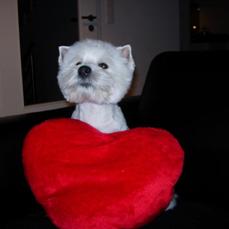 Lou-Lou kleiner Hund mit großem Herz :-))))