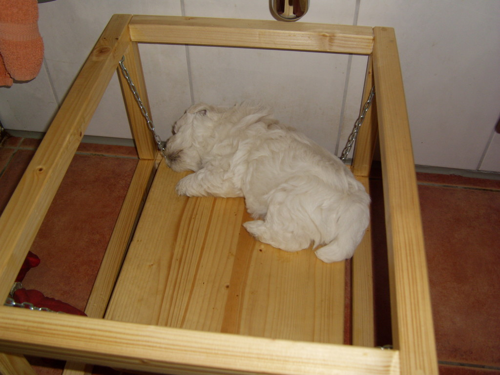 Auf dem Wackelbrett kann man auch gut schlafen :-))))