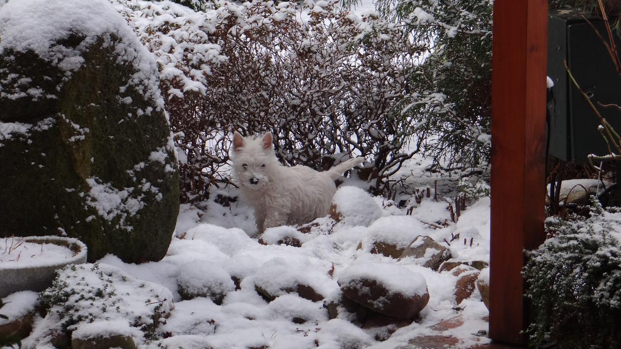 Schneefrau Luna :-))