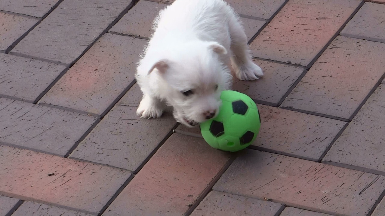 Ball spielen ist auch toll
