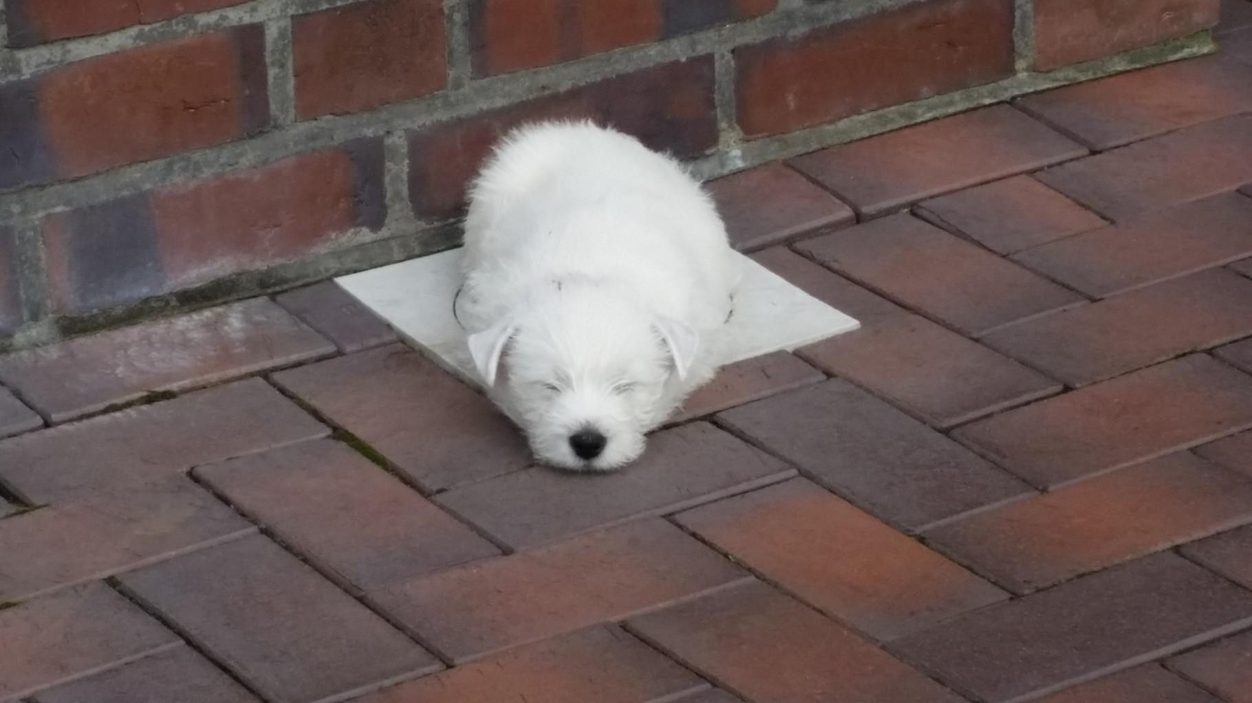 Rasko ist müde