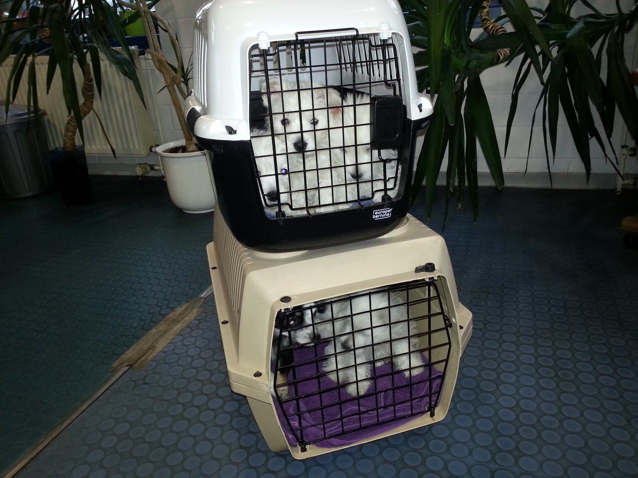 Beim Tierarzt, Mischka hat sich in in die Box eingeschlichen :-)))