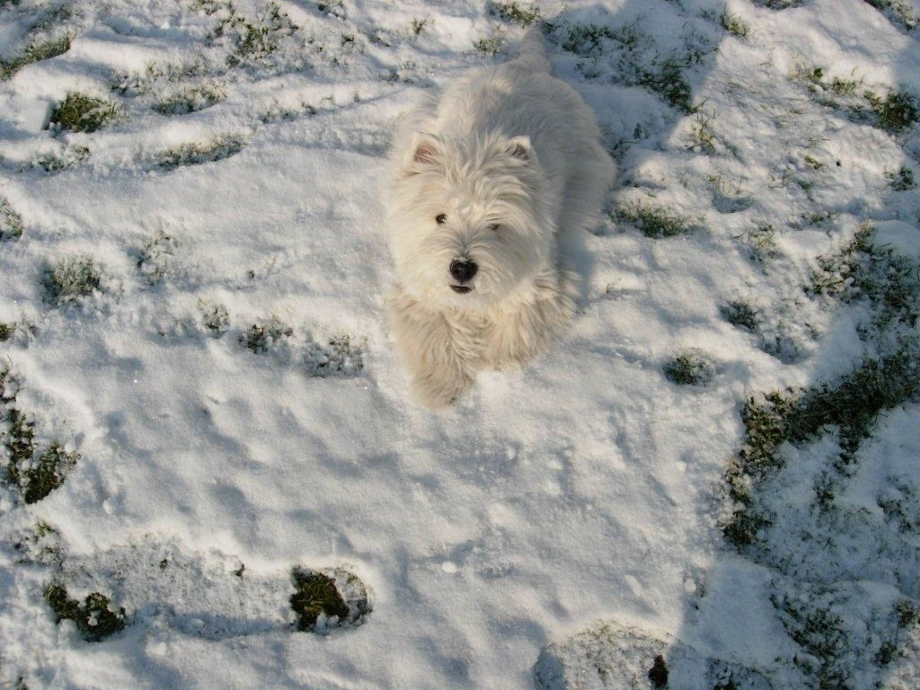 Lou-Lou`s erster Schnee