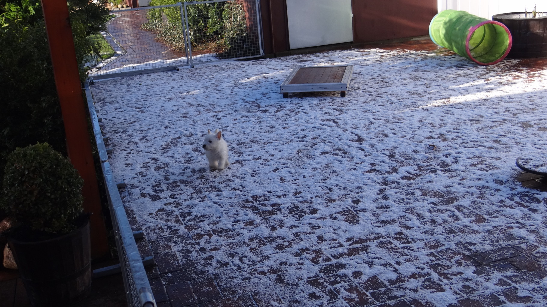 Schnee...................Jack findet das cool ...