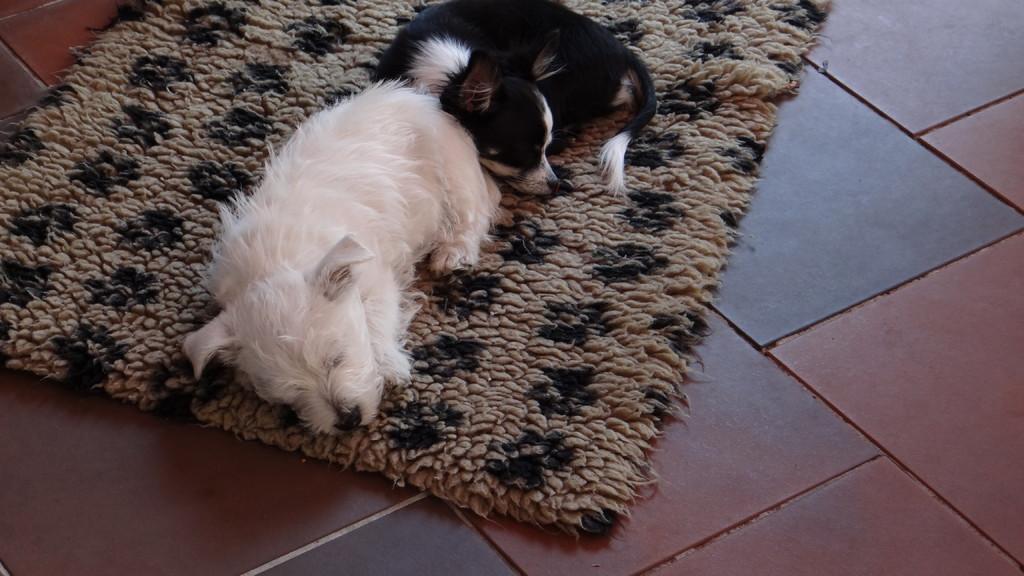 gemeinsamer Mittagsschlaf
