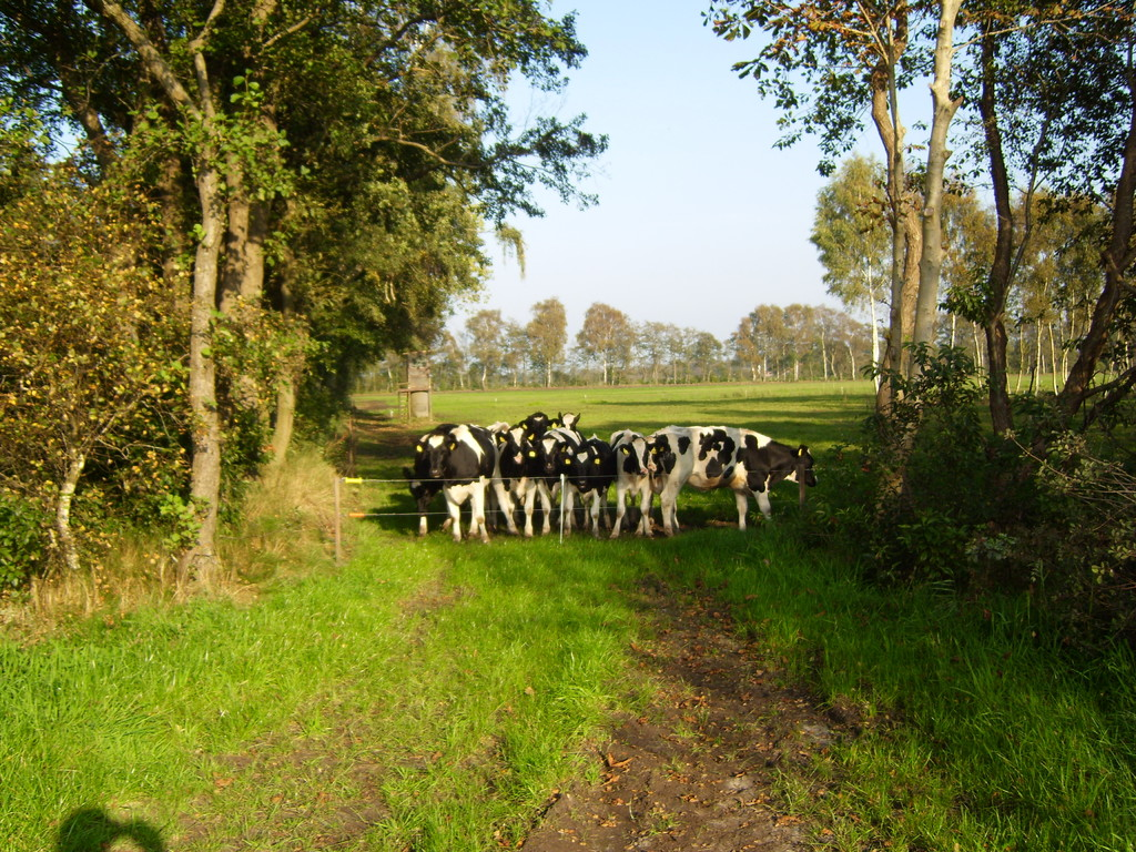 Oh, nur so ein paar Kühe. Sind ganz schön groß