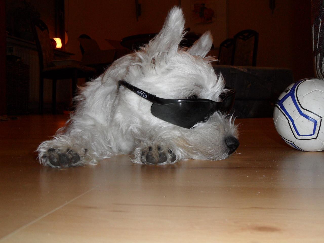 Herrchens Sonnenbrille steht mir auch sehr gut